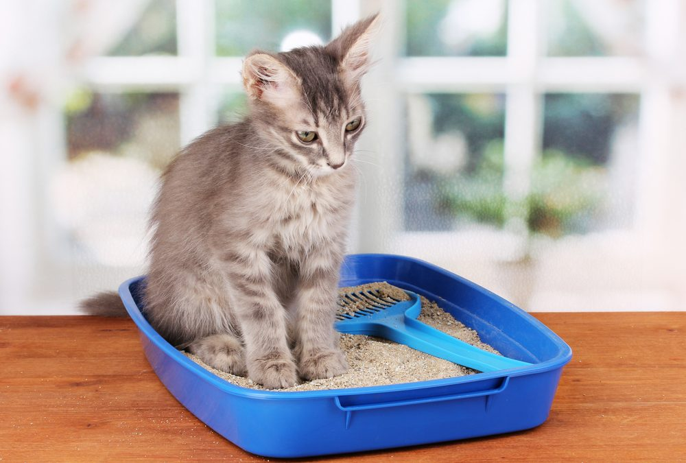 The Merry Little Box Pet House and Litter Box Review
