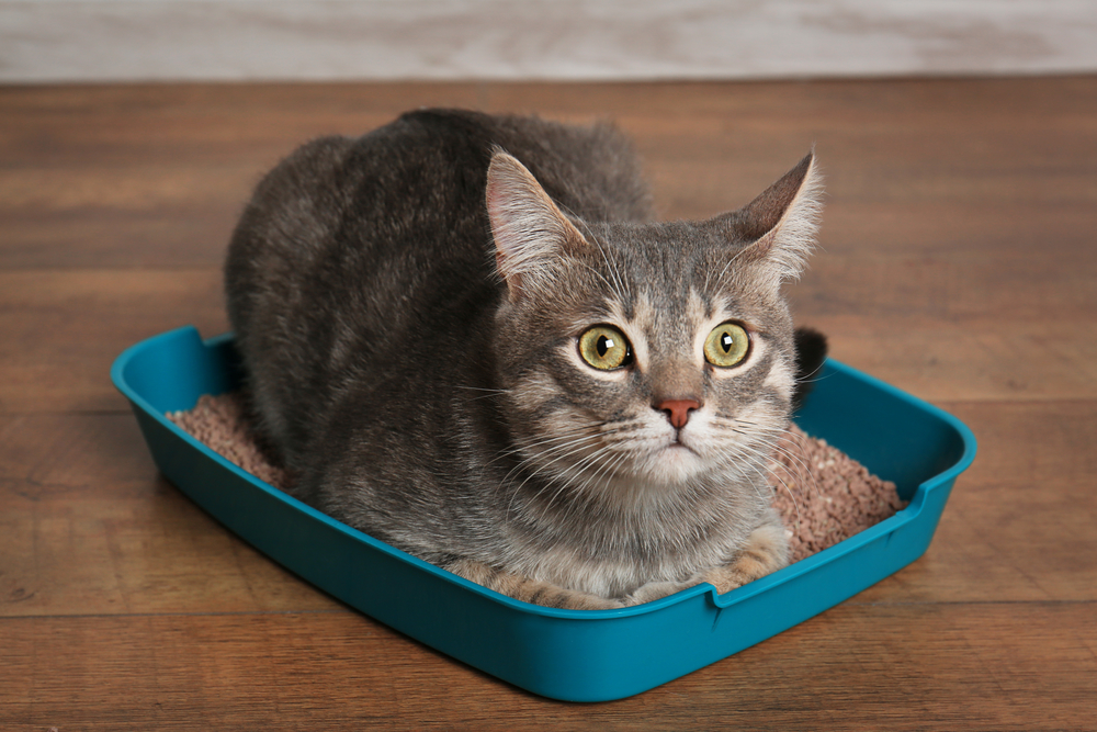 The Trixie Wood Cat Home and Litter Box Review