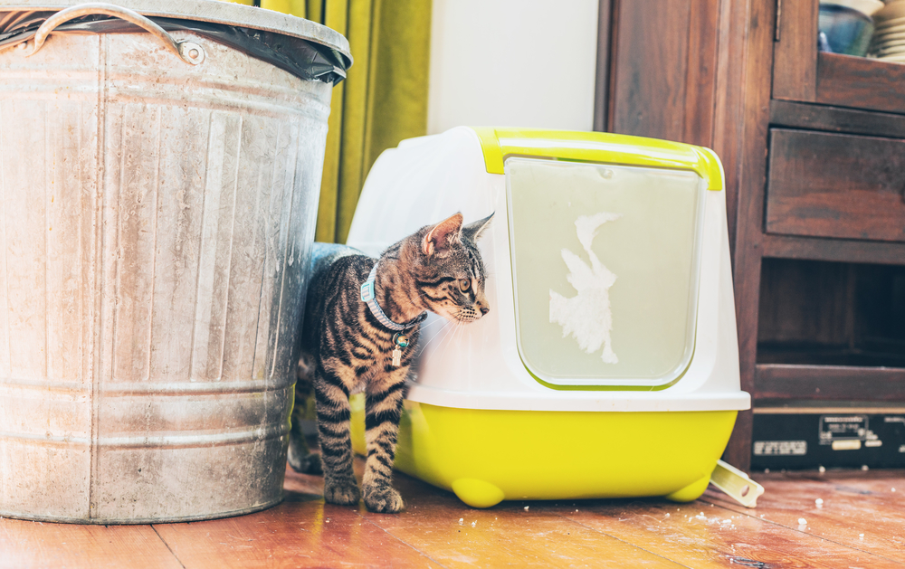 PetSafe ScoopFree Ultra Self-Cleaning Cat Litter Box Review